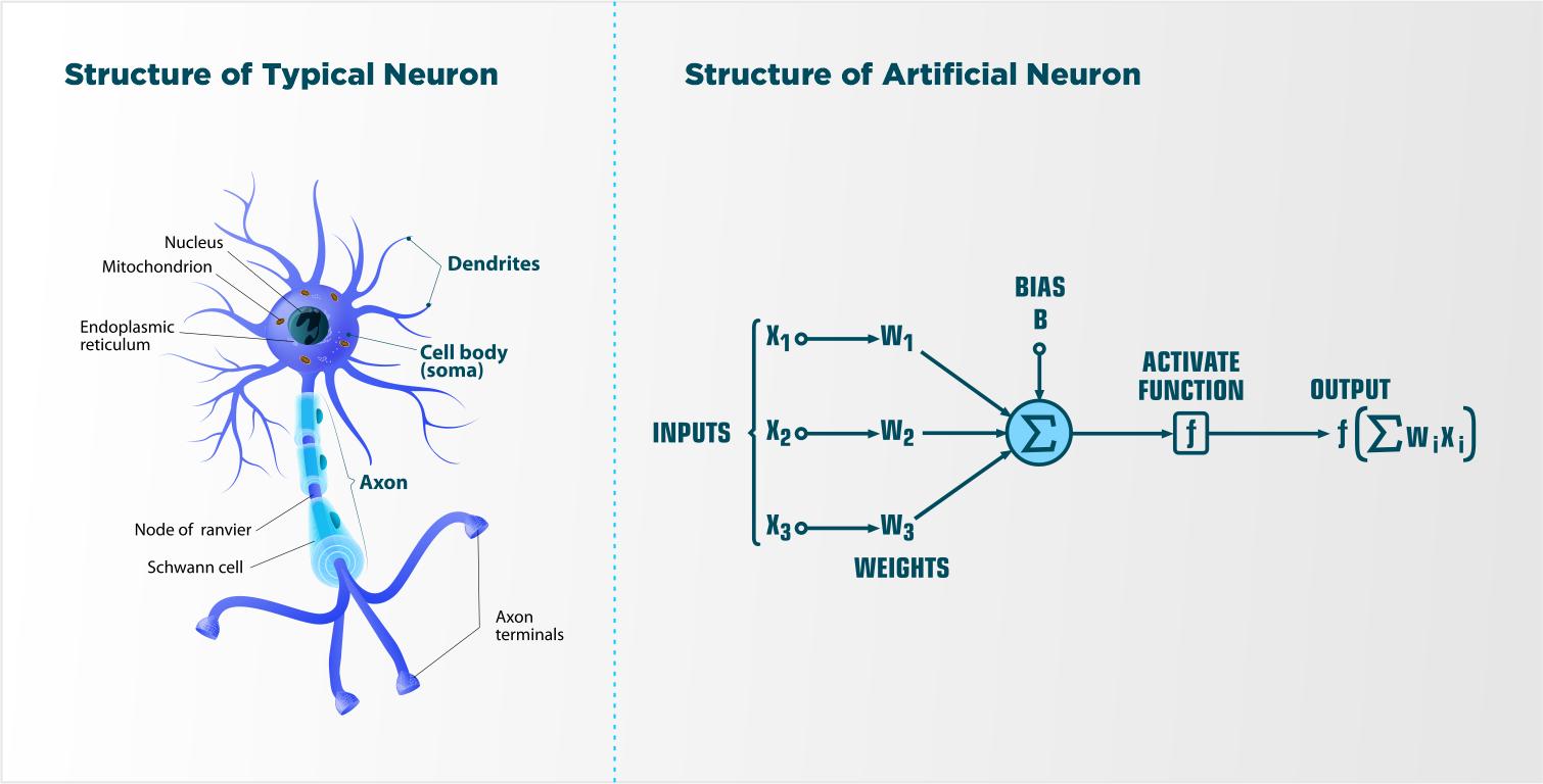 Znalezione obrazy dla zapytania: neural networks brain